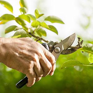 thumb_pruning