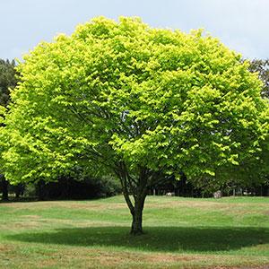 thumb_tree
