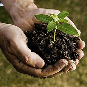 tree-fertilization-2