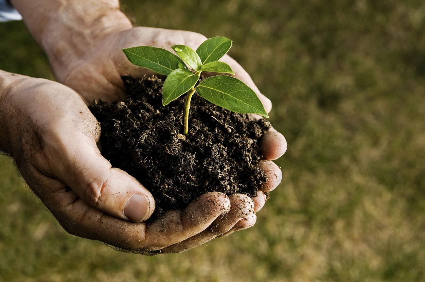 tree-fertilization2