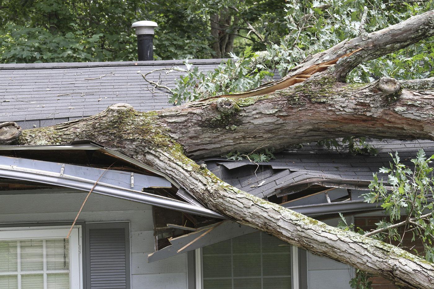 tree-hazards-2