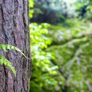 tree-inspect