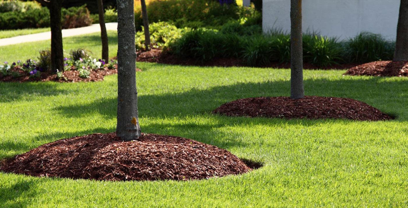 tree-mulch
